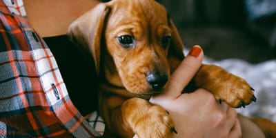 8 cosas que tu cachorro odia que hagas