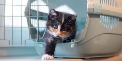 La mejor transportadora para tu gato: 5 consejos para no fallar en la compra