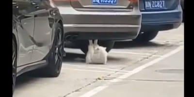 Kot_pod_samochodem