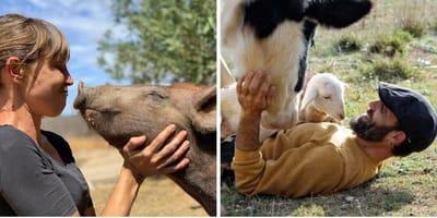 santuario vegano animales