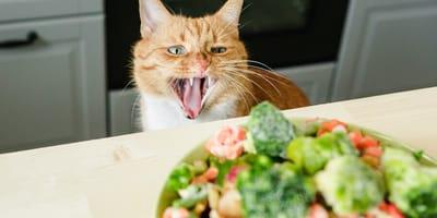 7 alimentos naturales para gatos que deberías incluir en su dieta
