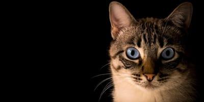 Vergiftung von Katzen: Alles, was Katzenfreunde wissen müssen