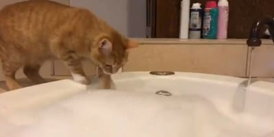 video gato baño espuma
