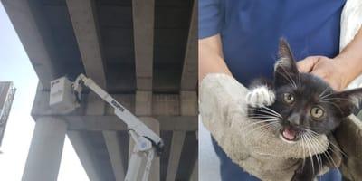 gato atrapado en puente en tamaulipas