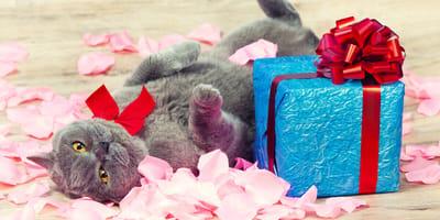 San valentin con mi gato