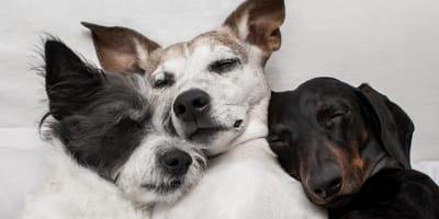 que sueñan los perros