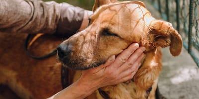 El alzheimer en perros, ¿qué síntomas tiene?