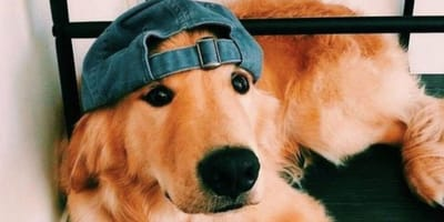 10 dog posts to melt even the coldest hearts this Valentine's Day