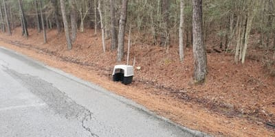 dog carrier on side of road