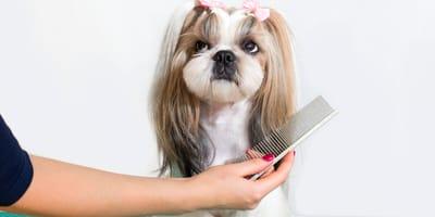 Małe psy długowłose - poznaj najpopularniejsze rasy