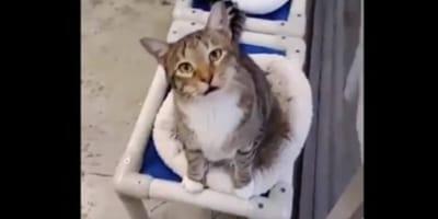 Nietypowe hobby tego kota postawiło całe schronisko na nogi!