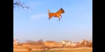 Pies_pod_drzewem_zabawka na drzewie