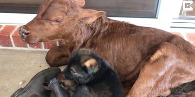 Die Hündin mit ihrem Adoptivkind.
