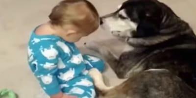 Śpiące dziecko upada na psa i wszyscy zamierają w bezruchu