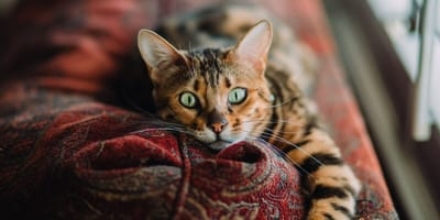 Esistono i gatti psicopatici? Se sì, come riconoscerli?