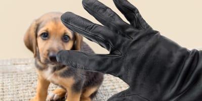 perros robados en mexico