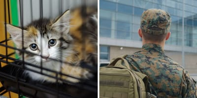 Katze und Soldat