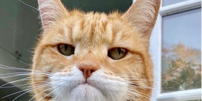 10 cats you should definitely be afraid of