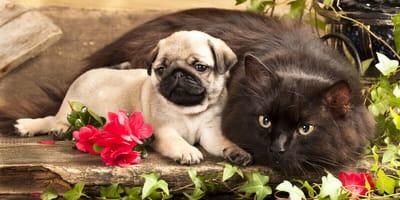 Gato adulto y cachorro