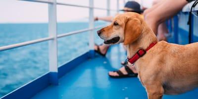 Alle Vierbeiner an Deck – auf Kreuzfahrt mit Hund