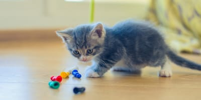What are the best toys for a kitten that is active and loves to play?