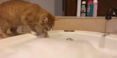 Kot i bąbelki kąpielowe.