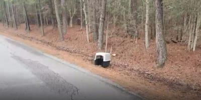 Hunde-Transportbox am Waldrand