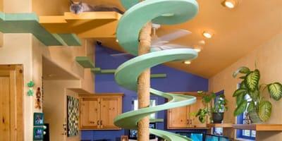 Budowlaniec zamienił swój dom w koci raj. Nie uwierzycie, jakie atrakcje zapewnił czworonogom