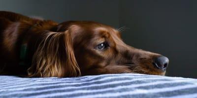 Wie erkenne ich, ob mein Hund Giardien hat?