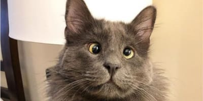 Meet the cat taking the internet by storm thanks to his unique looks