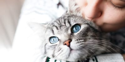 Grey cat with blue eyes in owner's arms