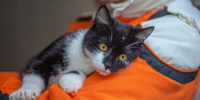 rescatistas ayudan a mascotas en wuhan