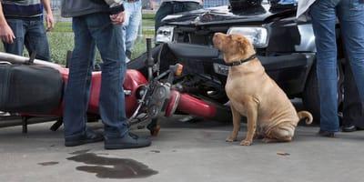 perro ocasiona accidente en oaxaca