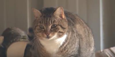 gatto-ha-percorso-400-km