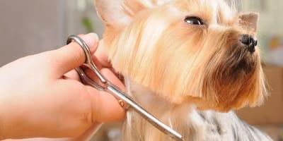 Los mejores cortes de pelo para tu perro