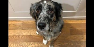 cane-davanti-la-porta-di-casa