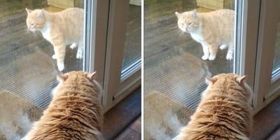 Kater und Katze schauen sich durch Fenster an