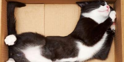 gatto dentro una scatola di cartone