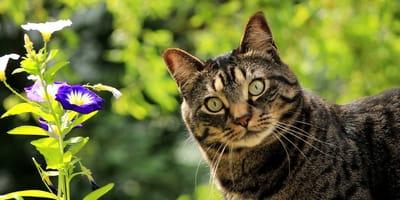 gatto-e-natura
