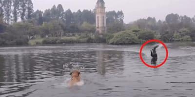 Hund im See mit schwarzem Schwan