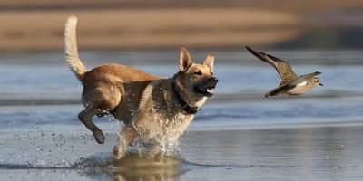 Entspannt unterwegs: Hunde ohne Jagdtrieb