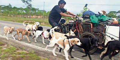 edgardo perros recorre el pais rescatando perros