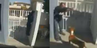 el perro ahuyento al ladron en monterrrey