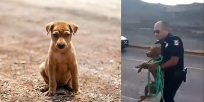 perrito rescatado por la guardia nacional