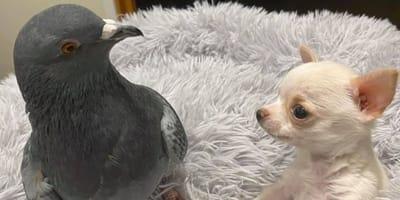 A bird and a puppy became best friends
