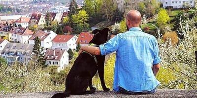 Schwabenhund: So hoch ist die Hundesteuer in Stuttgart
