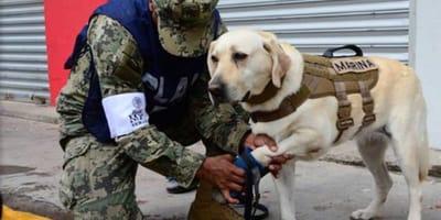 perros  del ejercito y la marina