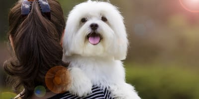 Peines para pelo largo: qué tipos hay y cuál es el mejor para mi perro