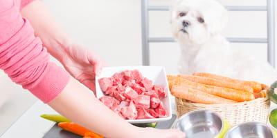 perro comiendo carne cruda