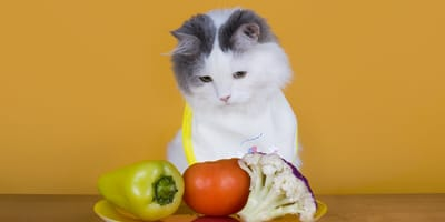 Cómo poner a dieta a mi gato